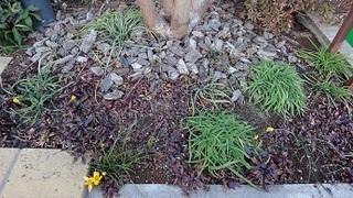 花のある庭.JPG